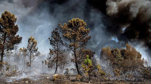 El Registro protege las superficies quemadas en España