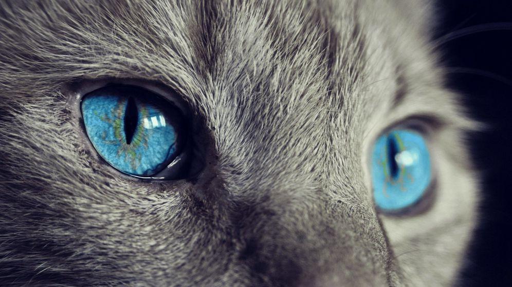 Foto: La gata no dejó que su dueña saliera de la cocina durante dos días