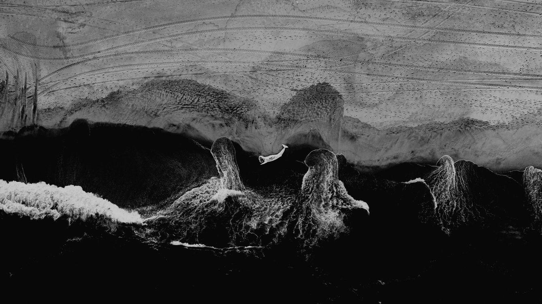 Foto: Imagen de una ballena muerta en las costas de Nueva Jersey. Foto: Ryan Loughlin