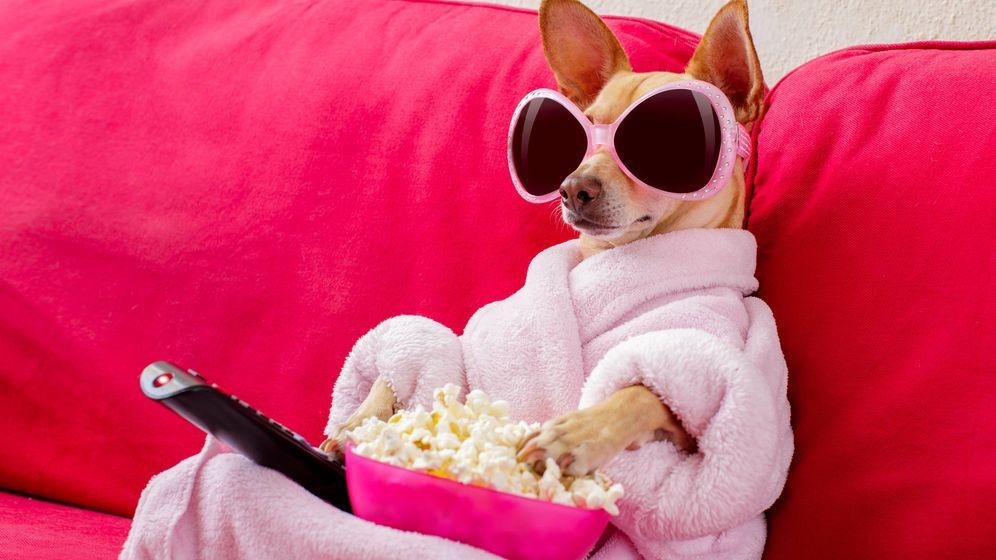 Foto: Mi alter ego canino listo para disfrutar de la televisión. (iStock)