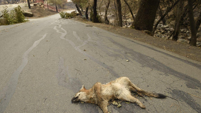 Donald Trump reautoriza el uso de 'bombas de cianuro' para matar animales salvajes
