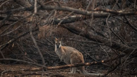 Apagados todos los incendios del estado australiano más golpeado por el fuego