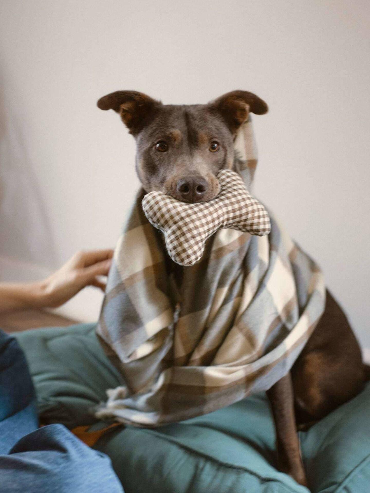 Manta y juguete para perros de Zara. (Cortesía)