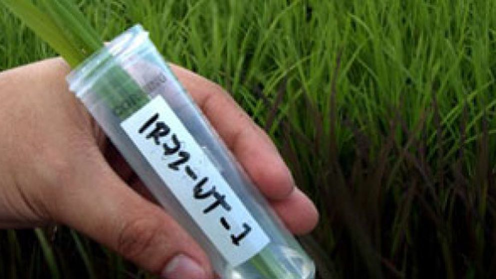 Alérgicos por culpa de la contaminación, los transgénicos y los químicos