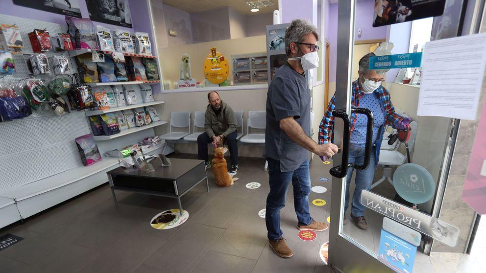 Los veterinarios prestan respiradores a las UCI de Madrid: También somos sanitarios