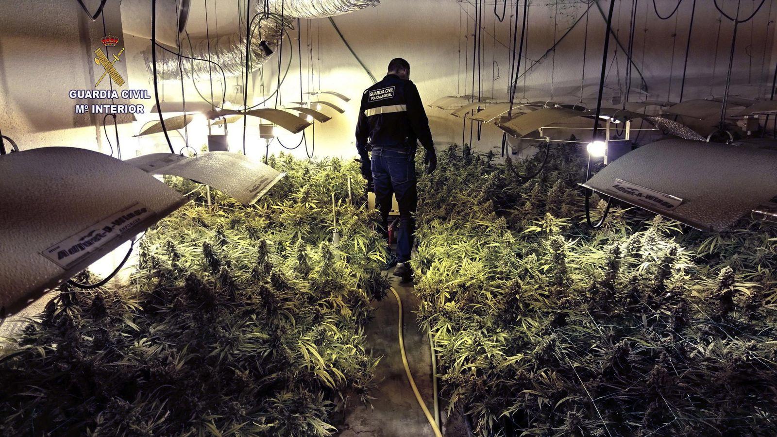 Foto: Imagen de la marihuana localizada en Cantabria el pasado mes de junio (EFE)