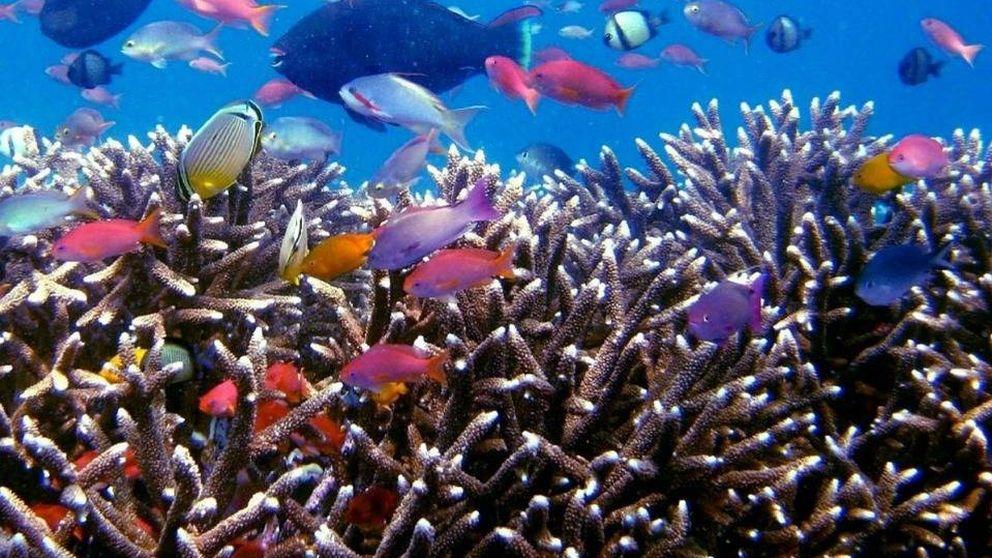 De Cabo de Gata a Islas Cíes: 10 paraísos submarinos para bucear en España
