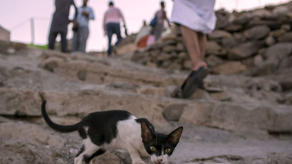 Foto: El gato apareció calcinado en el interior de una papelera (EFE/Sedat Suna)