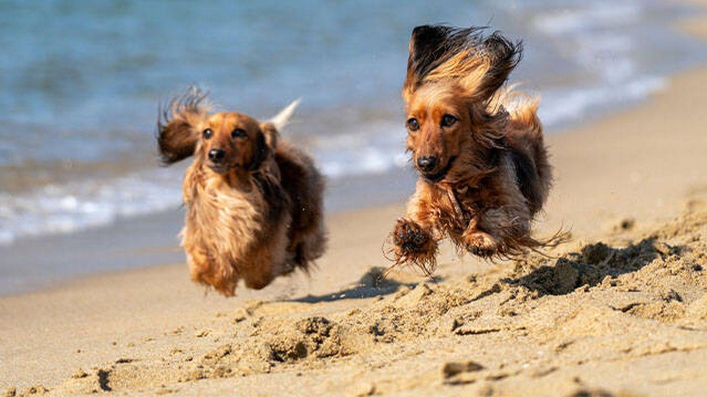 Perros corriendo por la playa (Kojirou Sasaki para Unsplash)
