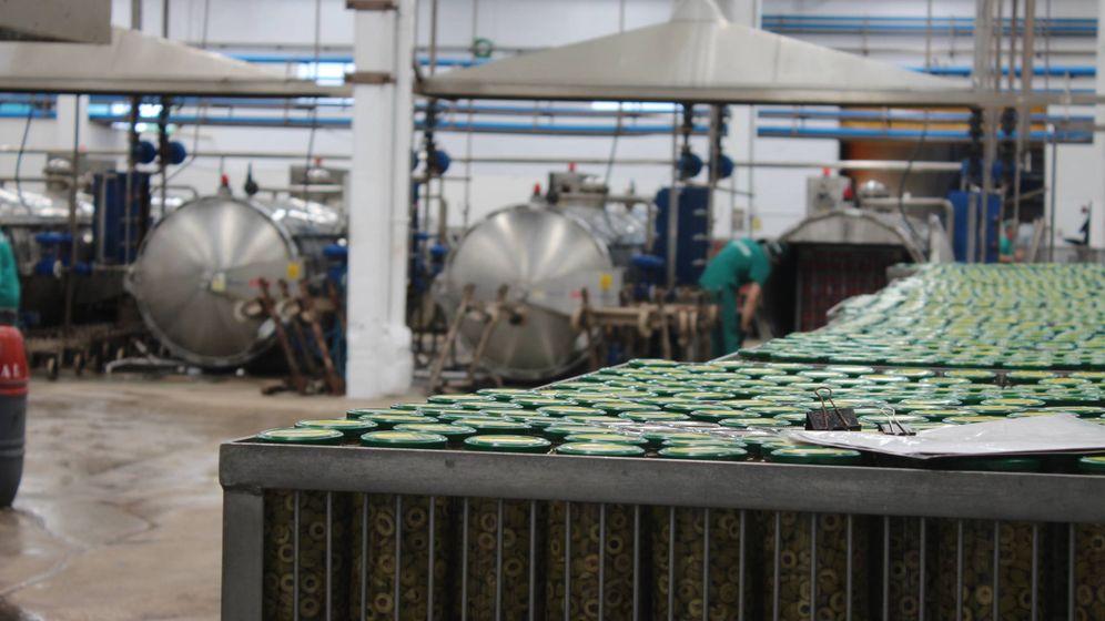 Foto: Planta de envasado de aceituna de Dcoop en Monturque (Córdoba). (Dcoop)