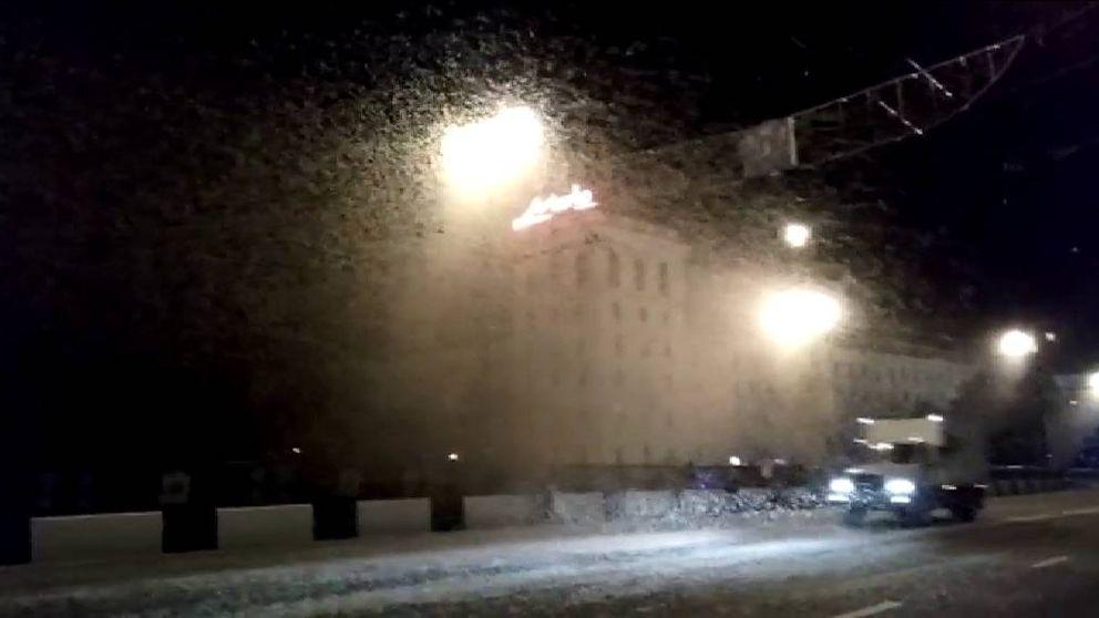 Nubes de insectos cubren las farolas de uns ciudad bielorrusa