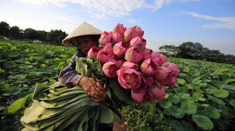Temporada de loto en Vietnam