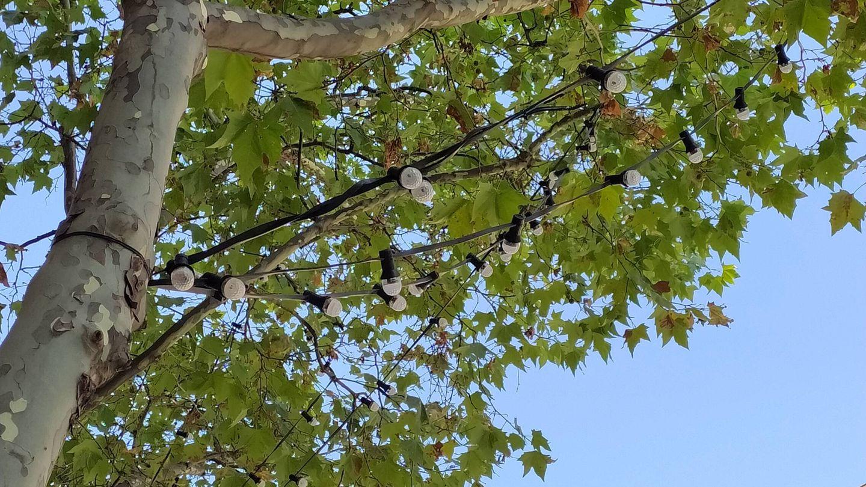 Bombillas en los árboles de la calle Sor Ángela de la Cruz.