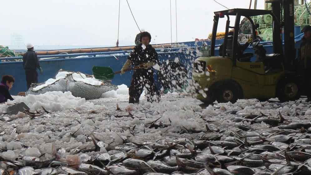Foto: Gran pesca de atún (Efe)