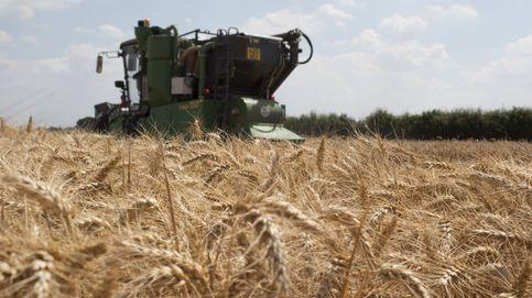 El pan del futuro ya está aquí: científicos secuencian los 107.891 genes del trigo