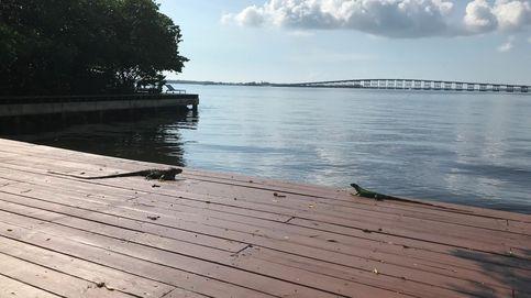 Salvar la Bahía Vizcaína de Miami