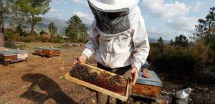 Post de Sigue la guerra de los pesticidas:
