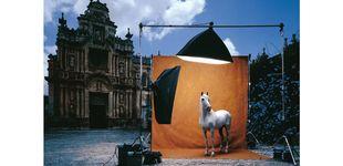 Post de Purasangre: la devoción por el caballo español en el mundo