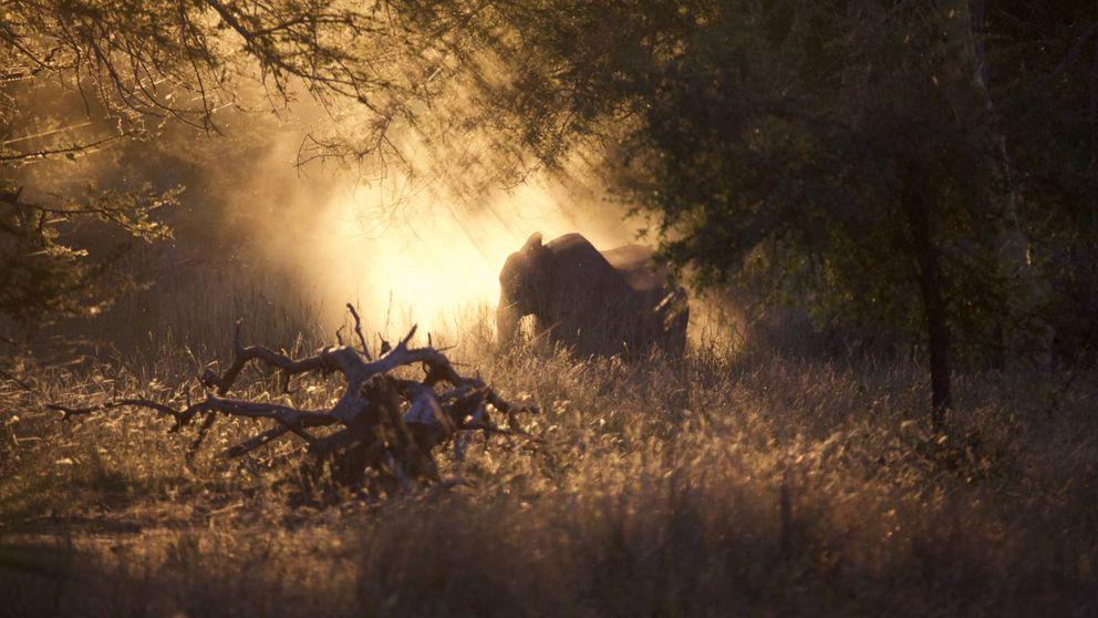 Estos son los animales a punto de desaparecer por las guerras en África