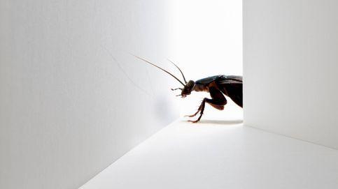 La cucaracha en la pantalla: el fallo garrafal de la banca que le impide innovar