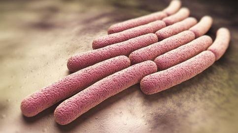 """La nueva superbacteria """"altamente contagiosa"""" que aterra a los médicos"""
