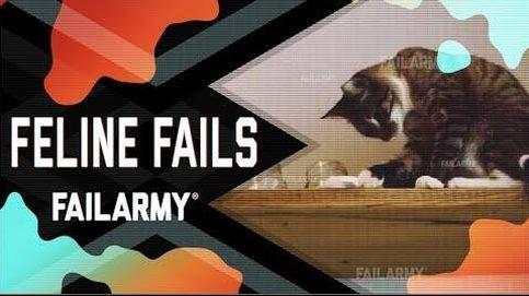 Los divertidos accidentes, caídas y choques de los gatos más torpes