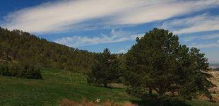 Post de Y Teruel volvió a existir: el proyecto que rescató sus bosques tras un incendio