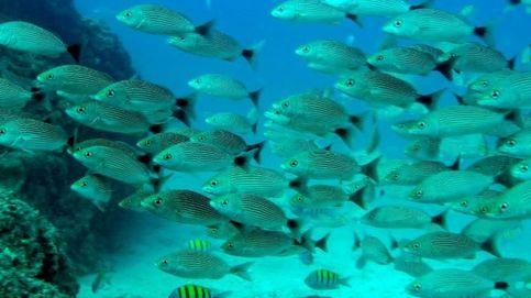 Electrocutar peces quedará prohibido en la UE a partir del 1 de julio