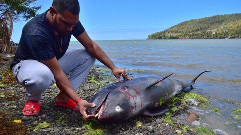 El desgarrador vídeo de un delfín que intenta salvar a su cría de un derrame de petróleo