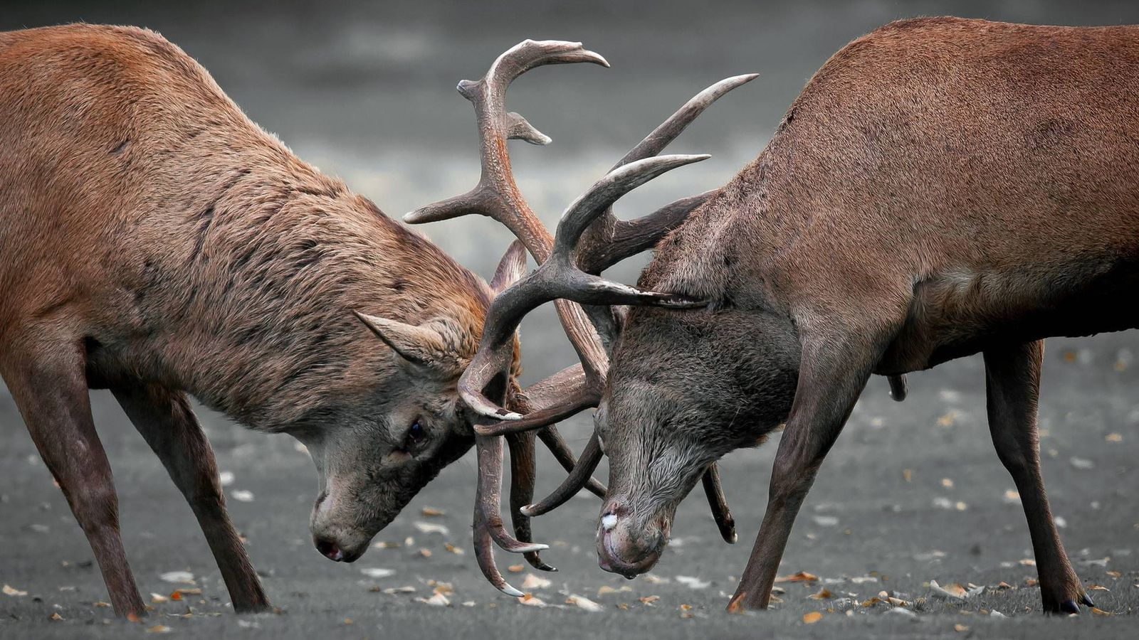 Animales Lucha O Muere El Lado Más Salvaje De La Naturaleza