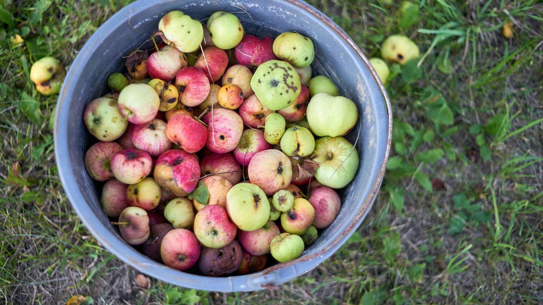 Producto de una plantación ecológica de manzanas. Unsplash