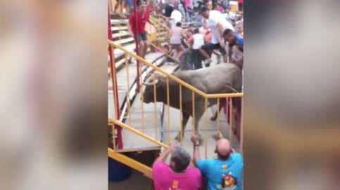 17 heridos por un toro que se ha escapado de un 'correbou' en Vidreres (Girona)