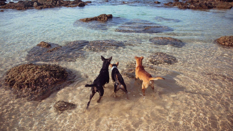 Playas para perros para tus vacaciones en España. (Klara Kulikova para Unsplash)