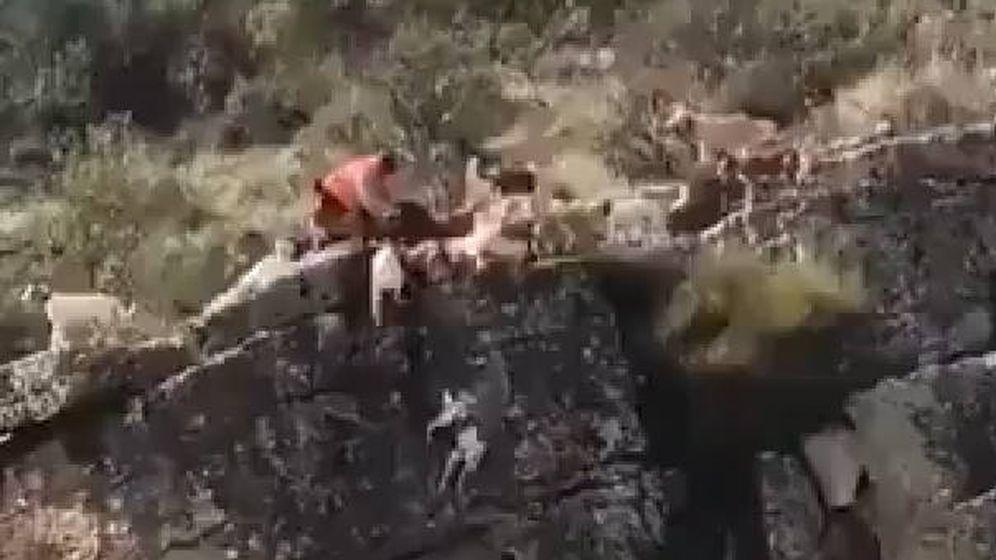 Foto: Una docena de perros y el venado cayeron por el barranco (Foto: Twitter)