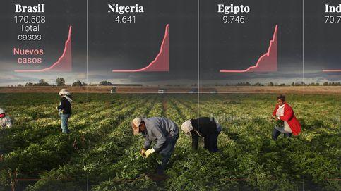 El covid que todo lo puede: Existe el riesgo de tener un problema de alimentos en 2021