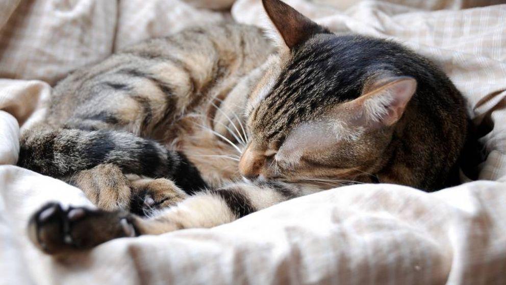 Día Internacional del Gato: una fecha variable para un amor incondicional