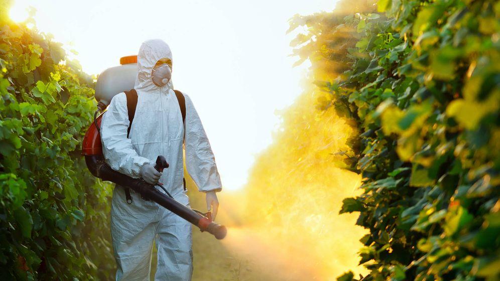 Foto: Los pesticidas son fundamentales para la agricultura intensiva. (iStock)