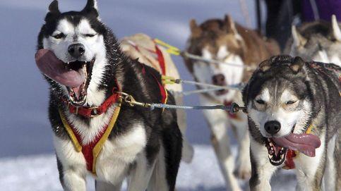 Campeonato del mundo de trineos tirados por perros