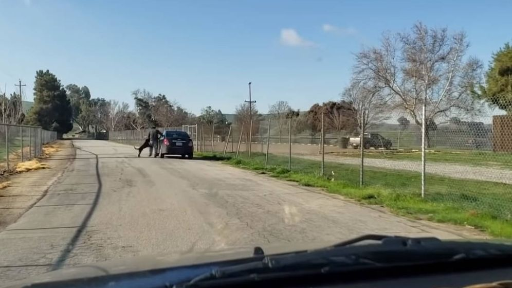 Foto: El hombre empuja al perro para evitar que se suba al coche (Foto: Facebook)