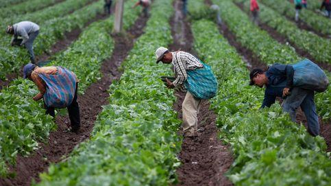 Crean un nuevo compuesto para que las cosechas no sufran con la sequía