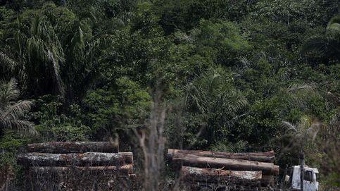 WWF: España, el tercer país europeo responsable de deforestar los trópicos