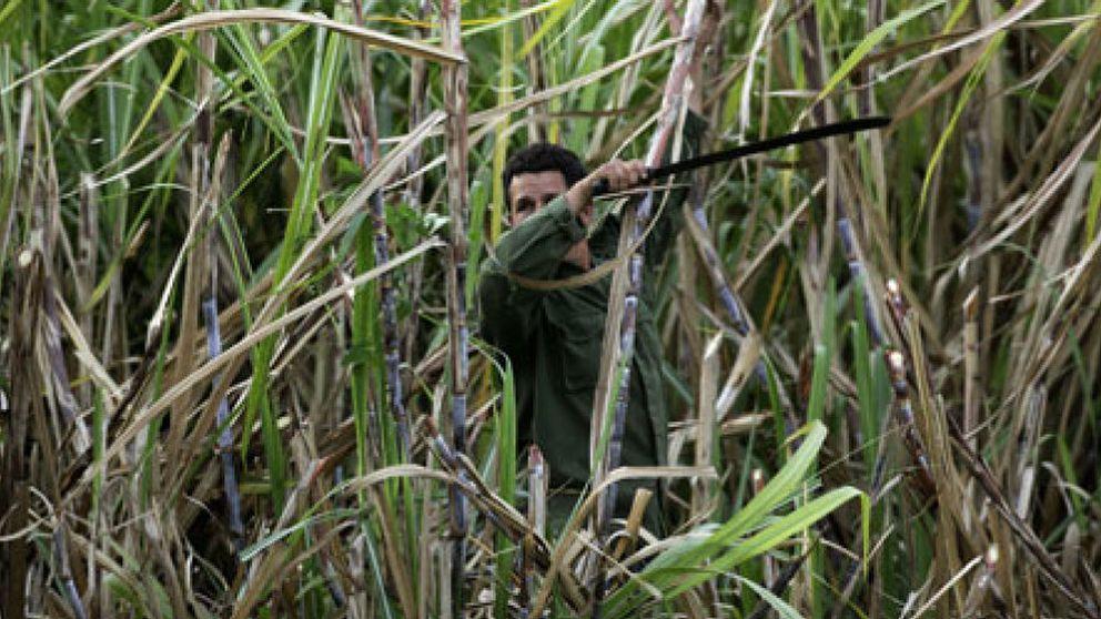La agricultura de Cuba se marchita sin la URSS