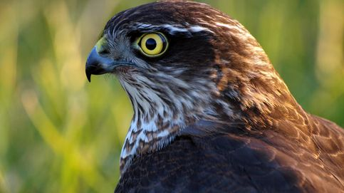 La caza furtiva de aves aún es un grave problema en España