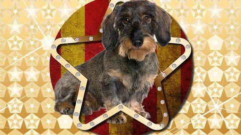 No sin mi perro: las 'pets party' de la alta sociedad catalana