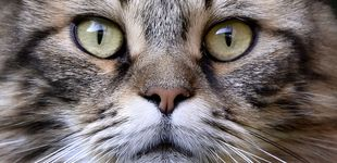 Post de Tener un gato como mascota puede ser beneficioso para tu salud