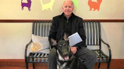 La historia de Major, el perro de Joe Biden: de un refugio de animales a la Casa Blanca