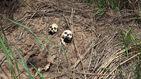 La milicia congoleña que sigue al fantasma de un príncipe guerrillero
