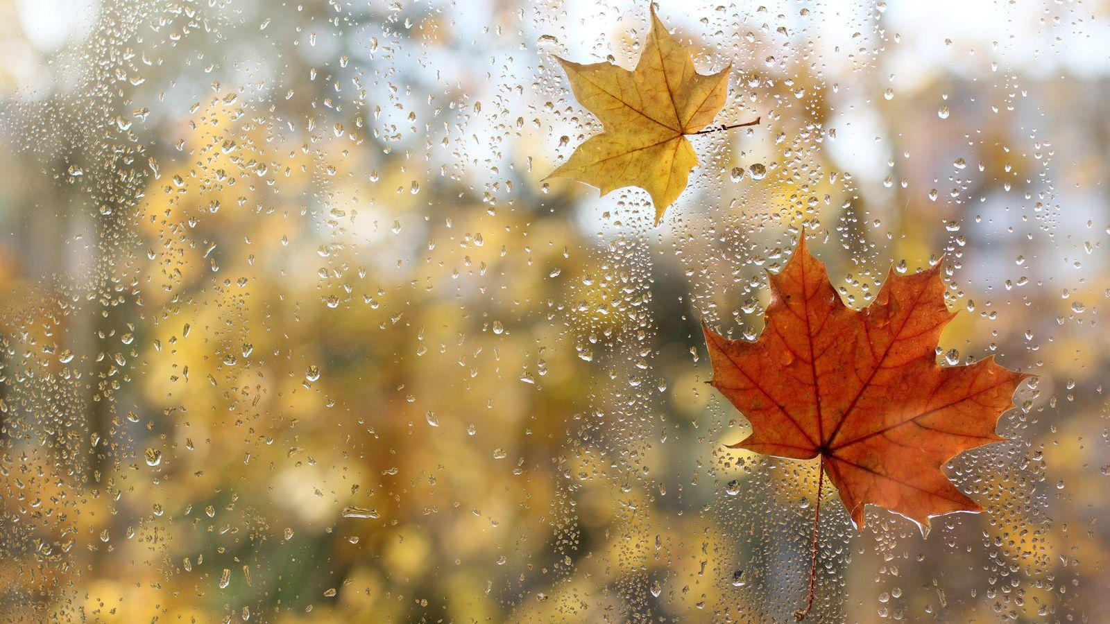 Foto: El tiempo: lluvia. (iStock)