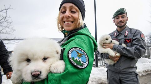 Rescatados tres cachorros del hotel sepultado en Italia