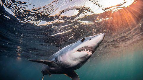 Muere un surfista tras el ataque de un tiburón en el este de Australia
